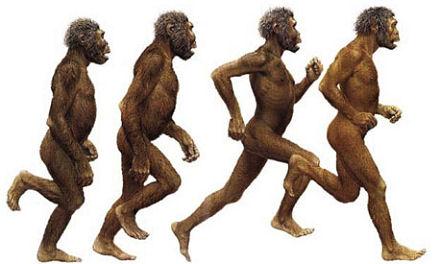 bipedal_hominid