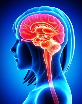 brain_woman