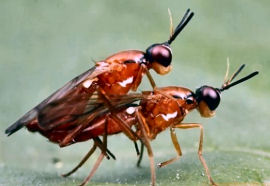 insect_mate
