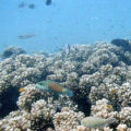 reef_oyster