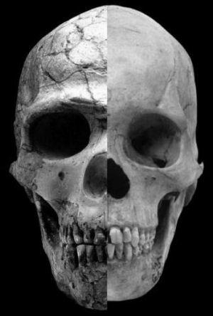 skull_testos1