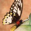 pollinator_smoking