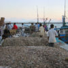 fish_catch